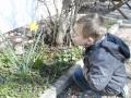 Finn freut sich an der erblühten Osterglocke